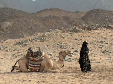 saddle camel: A Camel saddled lying Accompanied by a Standing Bedouin Woman in black veil, on a desert Stock Photo