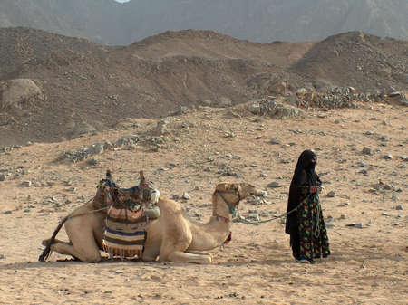 vergezeld: Een Camel opgezadeld leugenachtige Accompanied door een permanent Bedoeïenen Woman in zwart sluier, op een woestijn Stockfoto