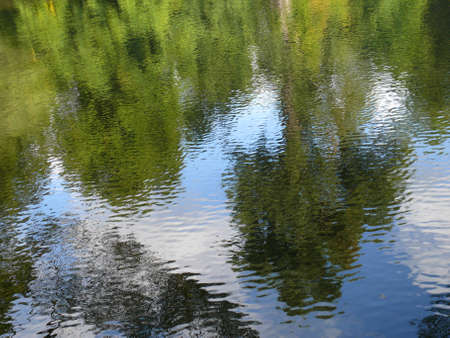 murky: Trees reflecting in water surface, abstract texture, background