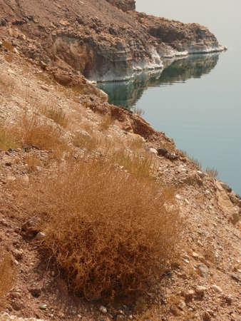 mineralized: Seashore of the Dead Sea, with salt sediments