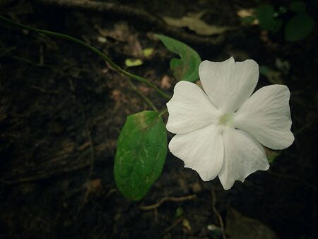 white: White flower in the wild.