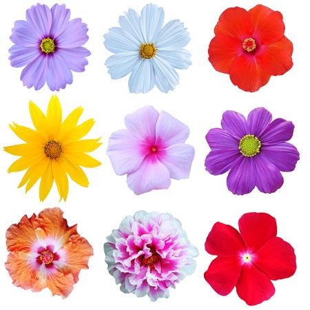 鮮やかな色の花コレクション ホワイト バック グラウンド。