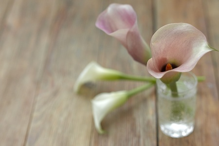 Pink and white calla lillies on a wooden background photo