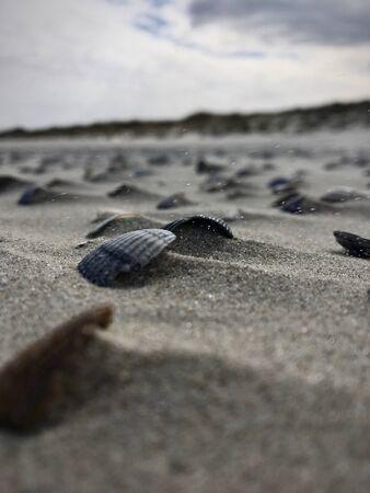 Makro-Aufnahme von Muscheln am Strand von Juist, Deutschland