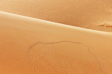 animal tracks: Una vista di tracce degli animali sulle dune di sabbia del deserto arabo