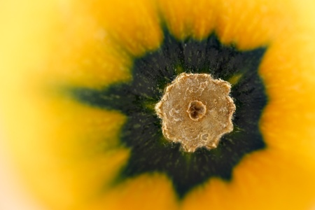 calabacin: Una imagen de primer plano de un amarillo del calabacín calabacín Foto de archivo