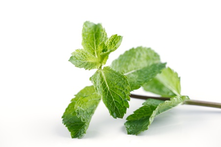 Fresh Mint leaves are hugely popular for tea and fresh juices and salads in Morocco, North Africa and Middle East Stock Photo - 22169827