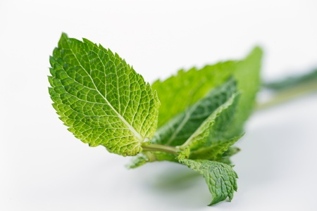 hugely: Fresh Mint leaves are hugely popular for tea and fresh juices and salads in Morocco, North Africa and Middle East Stock Photo