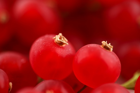 Fresh organic red currants shot in an abstract manner on a white ceramic surface Stock Photo - 22169771