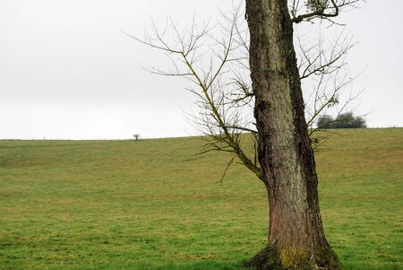 Tree in a countryside field, meadow. Nature and green grass on a cloudy fall day