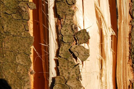 Close up of a bark tree texture. Wood macro photography