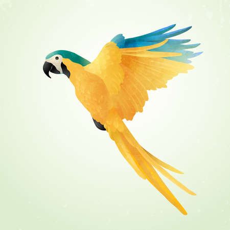 Flying blue and gold macaw isolated on light background. Vector illustration of Brazilian Ara. Watercolor on paper craft style.