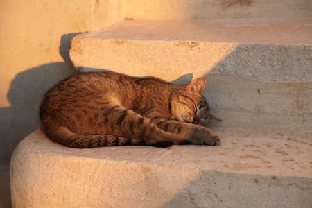 stupor: gato durmiendo