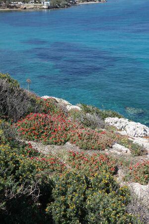 scrub grass: Paros island in the Cyclades in Greece