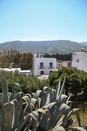 Cactus and typical house on Paros island in the Cylcades  Greece  photo