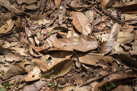 dry leaf: dry leaf on  floor in the forest Stock Photo