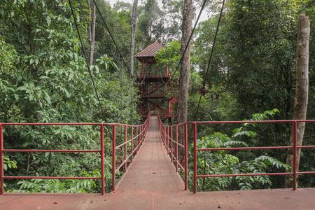 watchtower: Watchtower in the jungle.