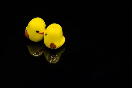 twee gele minnekuikens die en met mooi weerspiegeld beeld op zwarte achtergrond kussen plakken Stockfoto