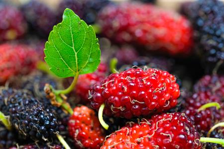 fresh organic mulberries, closeup