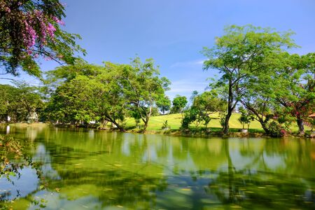 A view of a serene pond with green grass and large shading trees which appear hazy on the top because of the gentle breeze. Фото со стока