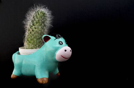 A small cuctus in a teal funny animal-shape terracotta pot. Black background.