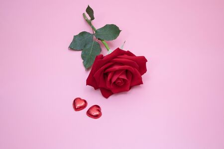 Closeup of a beautiful red rose on pink background with two red candy hearts.  Valentines,  anniversary, wedding concept.