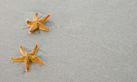 Two orange sstarfish on a white sandy beach.