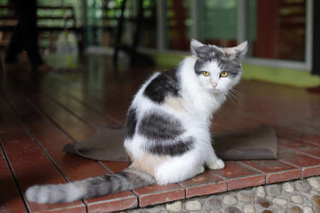 A black, white, and brown domestic cat with yellow eyes looking intensely at something on the front porch.