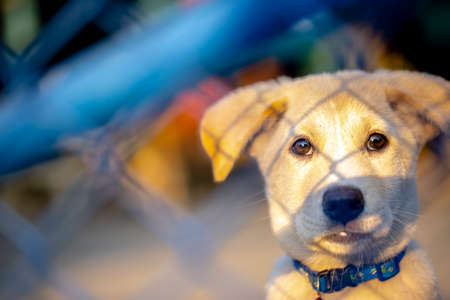 A young puppy sitting behind a fence with a glow of early morning sun shining on its face.