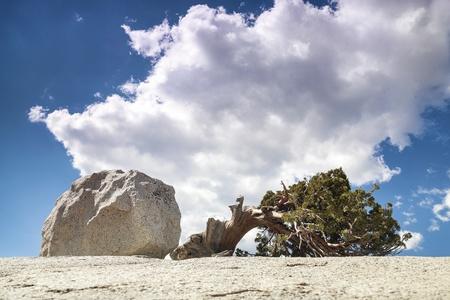 Yosemite Valley, Yosemite National Park, California, USA Stock Photo - 16840524