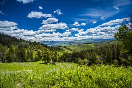 Yellowstone National Park Forest Landscape, Wyoming, USA photo