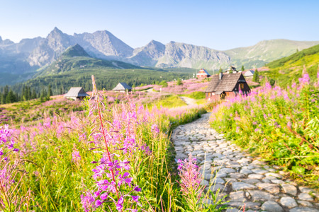 flowery: Wooden huts scattered on flowery meadow in Tatra Mountains National Park, Poland Stock Photo