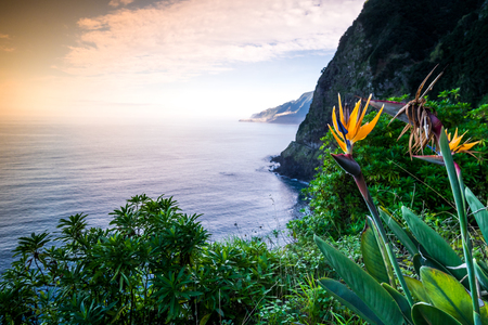 bloom bird of paradise: Strelitzia blooming on Madeira, Portugal