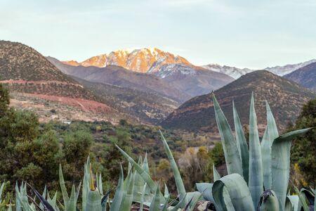 Agave growing in Atlas mountains at sunset, Marrakech, Morocco Banco de Imagens
