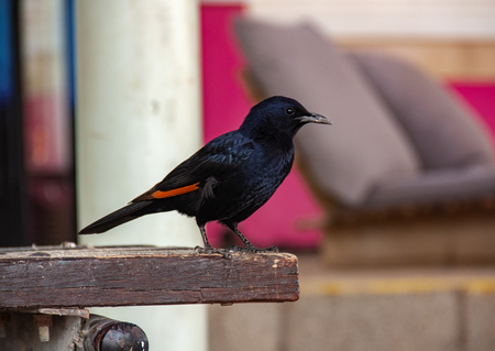 The starling arrived and sat down on the bench
