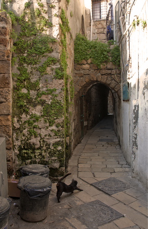 a narrow street with arches in the ancient city with lazily stretching cat in the foreground Reklamní fotografie