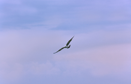 Seagull hovering against the sky as a symbol of sea travel