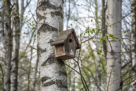 house for birds hanging on a birch tree