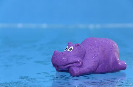Rubber Hippo toy on wet blue background