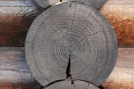 The texture of the cross pine cut close-up