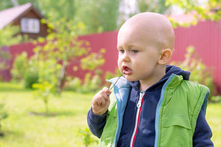 A thoughtful little boy with a twig in his mouth which he holds with his dirty hand against a rural background