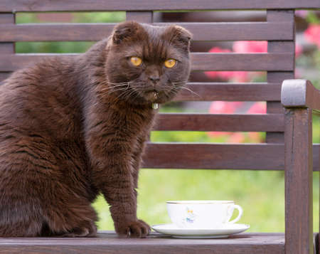 A cat with a face stained with milk sits on a bench next to a Cup of tea with milk