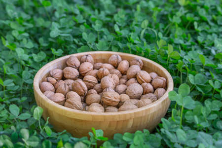 Unpeeled walnuts in a wooden bowl on a green background