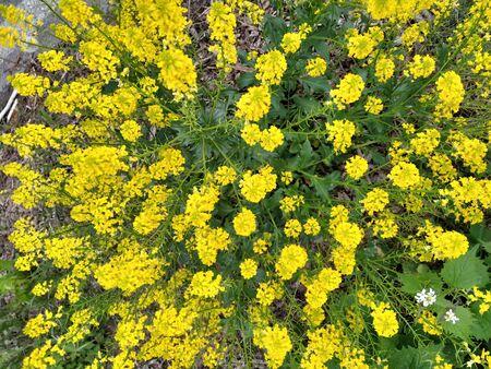 shrub branched shading , brightly dazzling Фото со стока