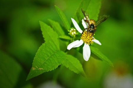 bee on flower: Bee on the flower in a field.