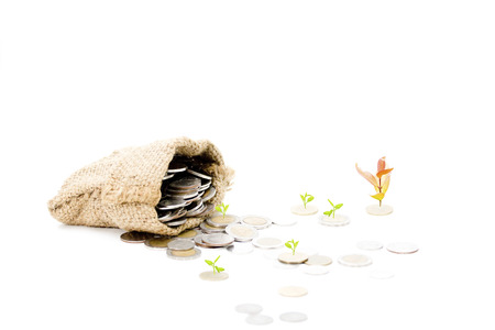 economic issues: Money Tree growing out of a Money Bag with Dollar in isolated on white background Stock Photo