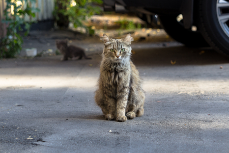 depth of field: Shallow depth field portrait of stray cat, with kitten on the background