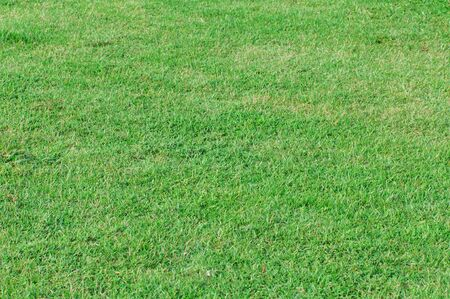 A background of green grass. Stock Photo