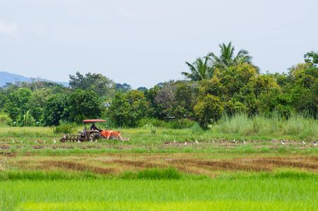 Farm worker preparing the ground for the growth of rice with tractor, Thailand Stock Photo - 14959771