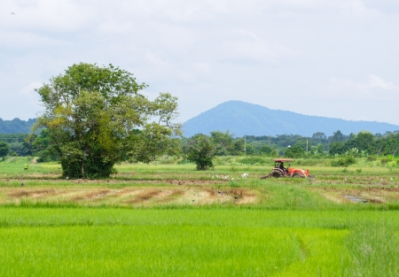 Farm worker preparing the ground for  the growth of rice with tractor, Thailand photo